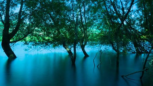 Lake in summer flood