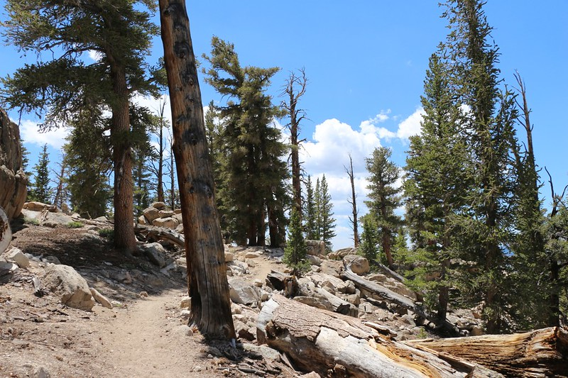 It was getting warm as we hiked up and over a ridge in the noon sun, on the PCT near Ash Meadow