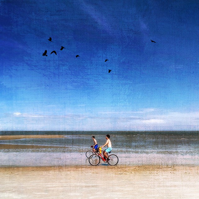Biking with birds