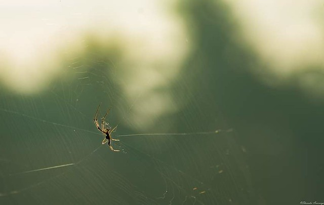 The greatest artist and web-designer ever is indeed a spider!