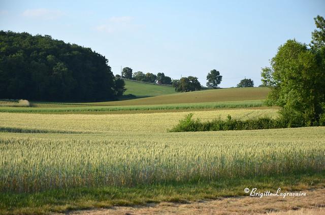 Généreux champs d'été