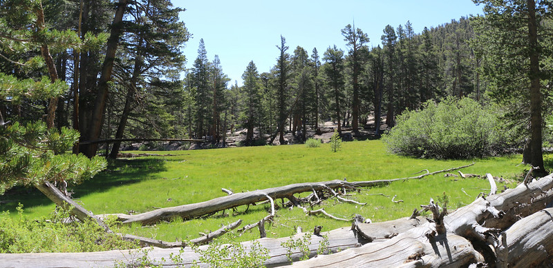 Meadow at PCT mile 738.3 near the Public Corral - the stream leads down into Ash Meadow