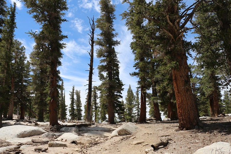 We arrived at Trail Pass, where the trail intersects the Pacific Crest Trail