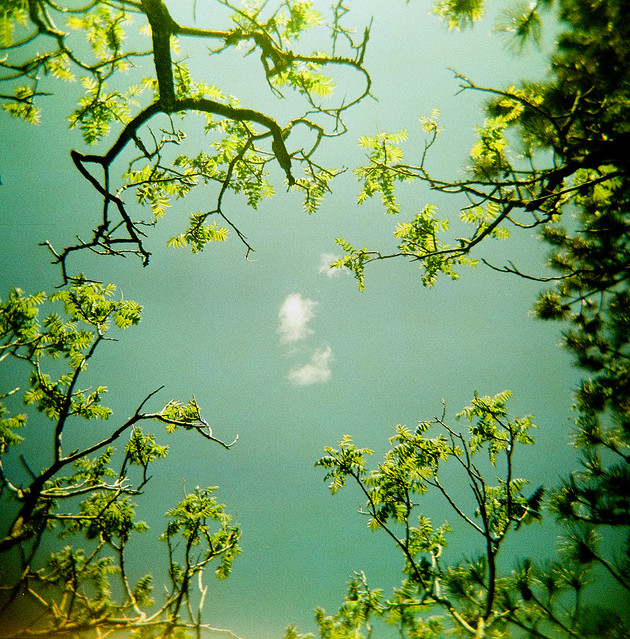 Spring, a Holga and trees