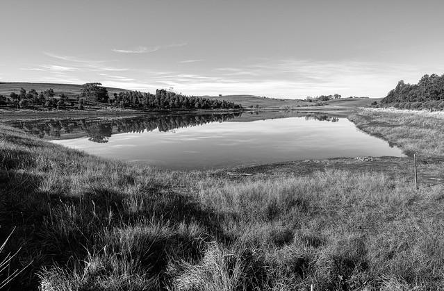 Evandale Pastures