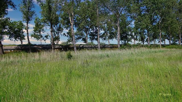 Ritthem - Anti tank  wall -  (2)