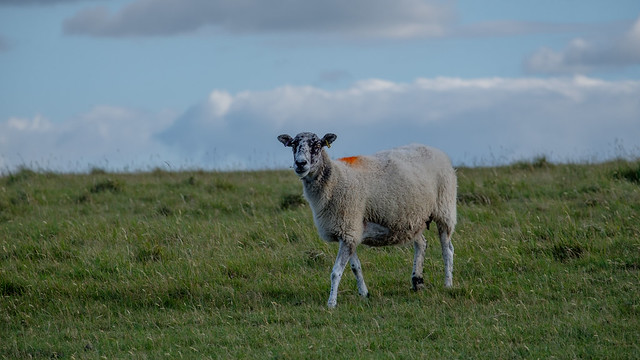 Cleeve Hill - The Cotswold Way