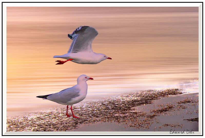 DSC02333海鸟完成-1带边框_01