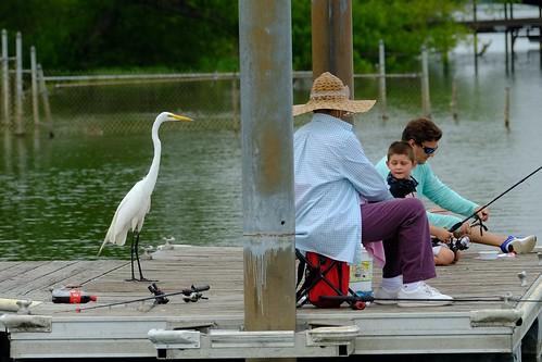 Egret Close Encounter