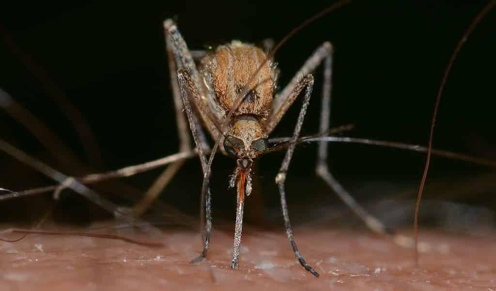 le-changement-climatique-poussera-le-virus-zika-en-europe