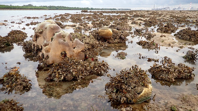 Living reefs of Terumbu Semakau, Jul 2020
