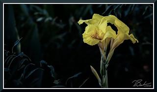 Flower_7680