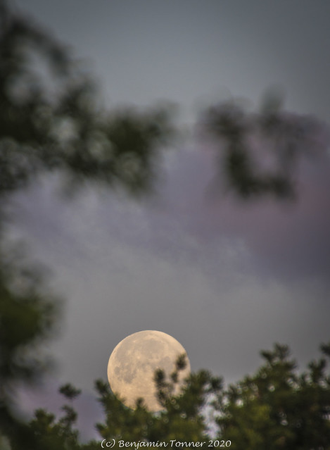 Moonset, Parkhurst Forest