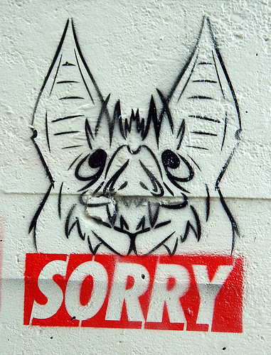 SORRY, a Canadian bat apologizes for coronavirus on behalf of all the bats in the world