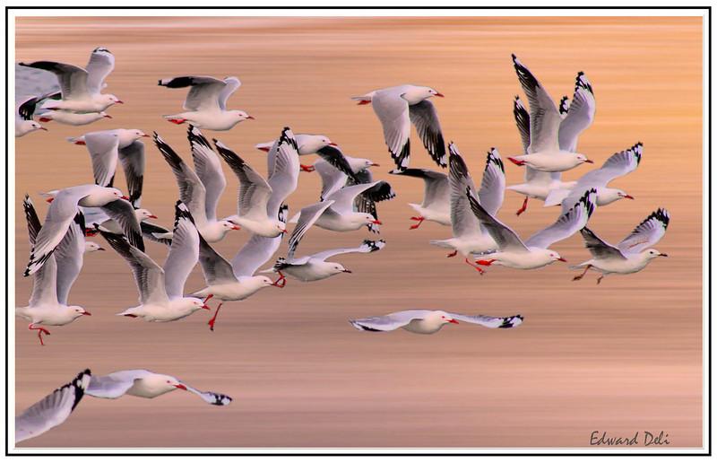 DSC09610-群鸟完成带框_01