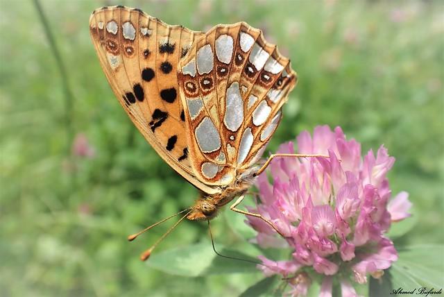 Butterfly 2005