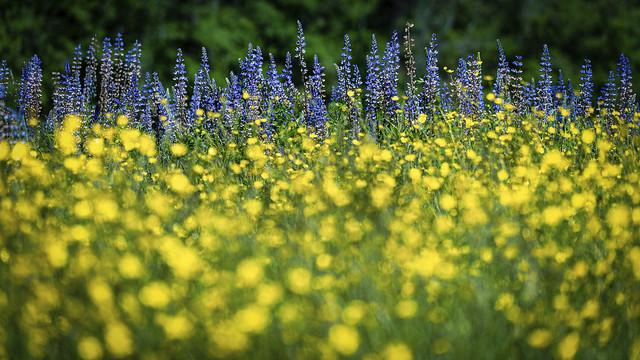 Spring Meadow (Explored)