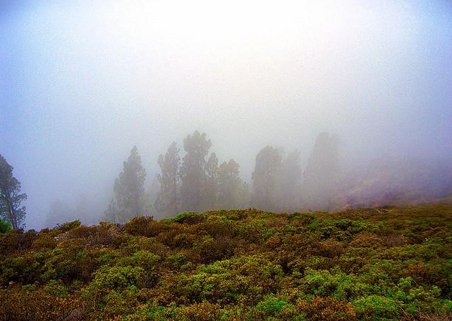La Gomera_Canary Islands_Spain 2469