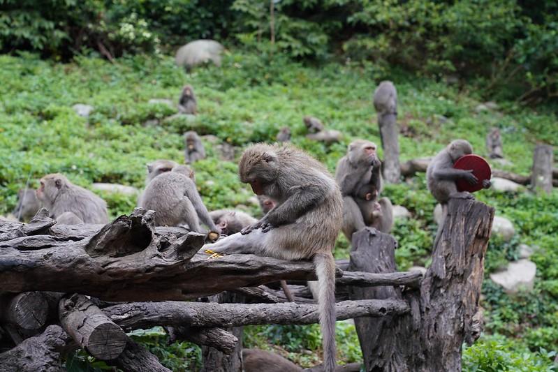 郭叔叔獼猴生態區