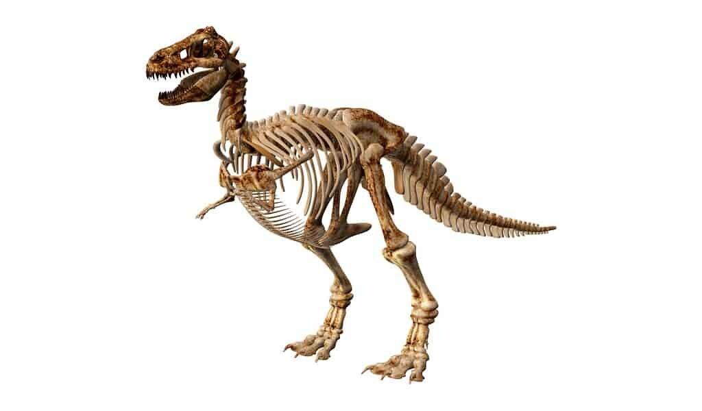Les dinosaures viennent de petits mangeurs d'insectes