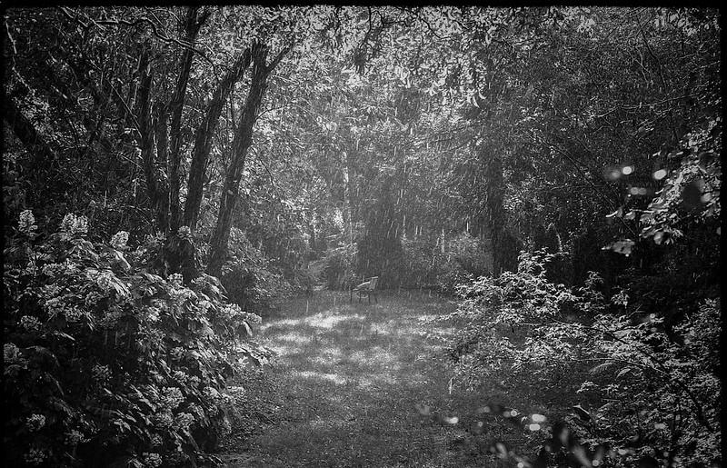 pouring rain (brightening), back yard, from the studio door, Asheville, NC, FED 4, Industar 61, Fomapan 200, Moersch Eco film developer, 7.1.20