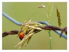 ladybug explorations