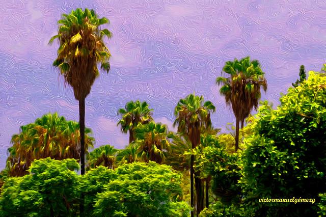 PALM TREES GARDEN.