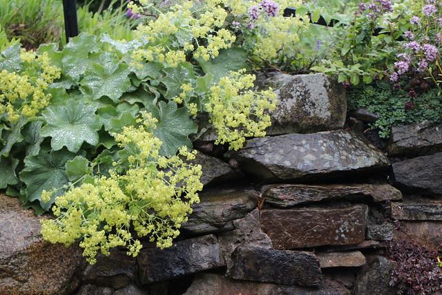 wet wall, wet plants, wet Wednesday