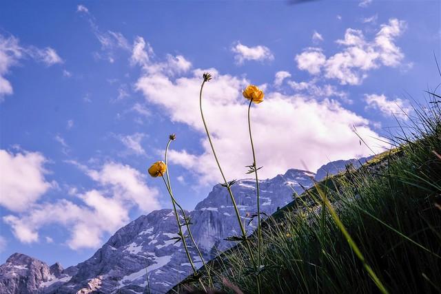 Mountain summer (Explored)