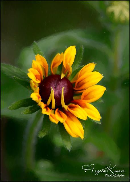 Painterly Garden Flower...