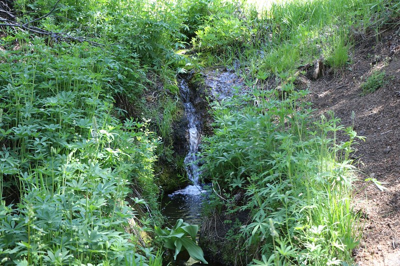The clear water where we filled our water jugs on Long Stringer near Gomez Meadow