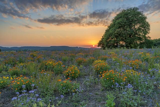 *Summer of wildflowers*