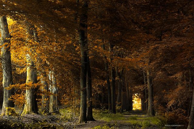 In Dark Trees
