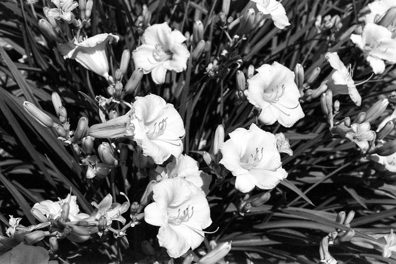 Black and White Floral Arrangement