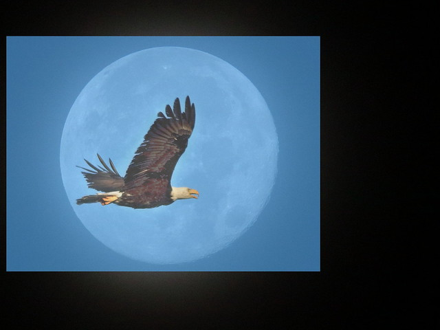 Bald Eagle Buck Moon composite 20200706