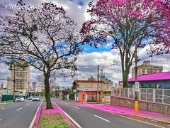 Rua florida.