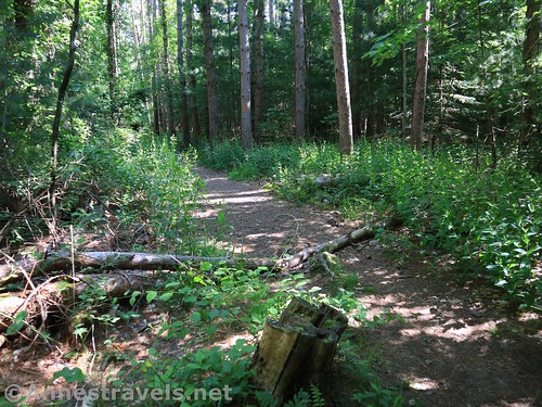 The Orange Trail - Turn left, Webster Park, New York