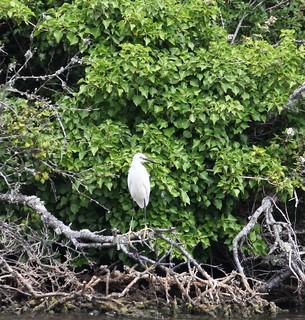 Bembridge Lagoons. Brading RSPB