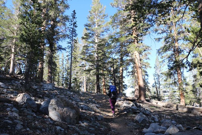 We climbed a long way up on the western side of Olancha Peak - the Golden Trout Wilderness Boundary is just beyond