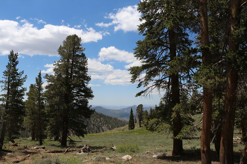 View over Brush Meadow on the PCT on the southwest slope of Olancha Peak