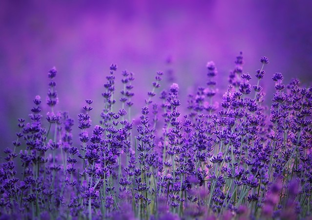 Purple hues! 💜