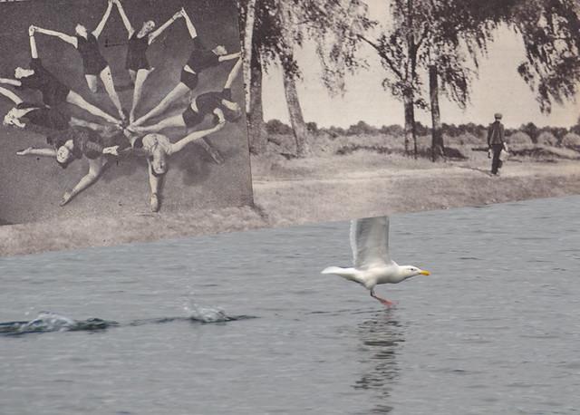 Seward Park Seagull