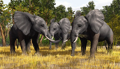 The Majestic Elephants