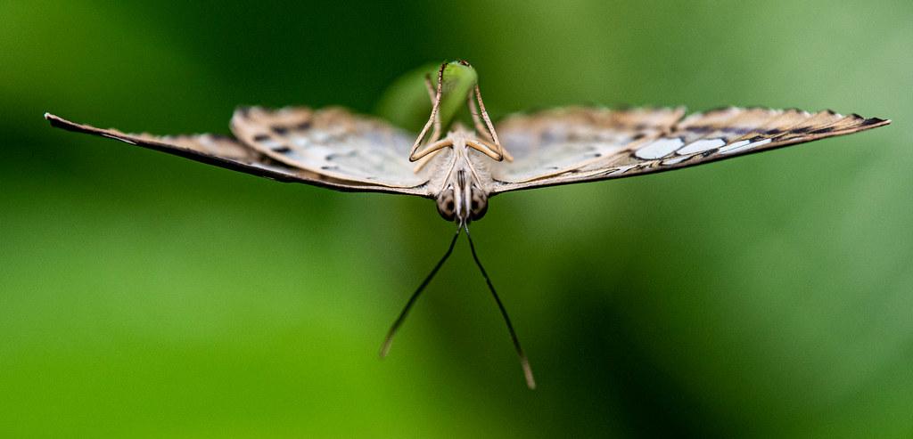 Butterfly_15