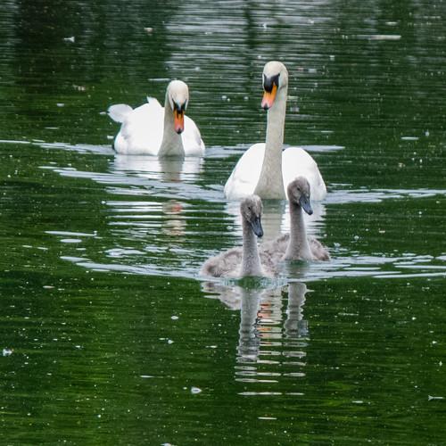 Ugly ducklings