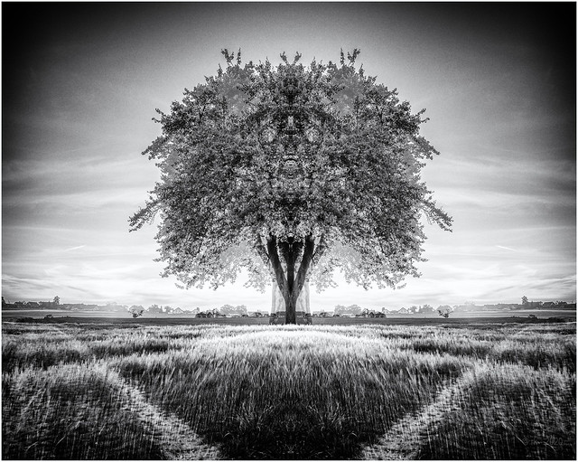 Magic Tree...