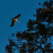 stork in Faro