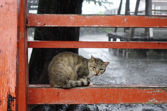 Today's Cat@2020ー07ー09