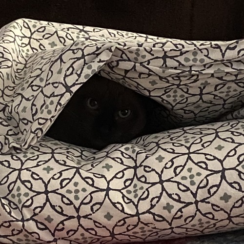 Eyes in the bed