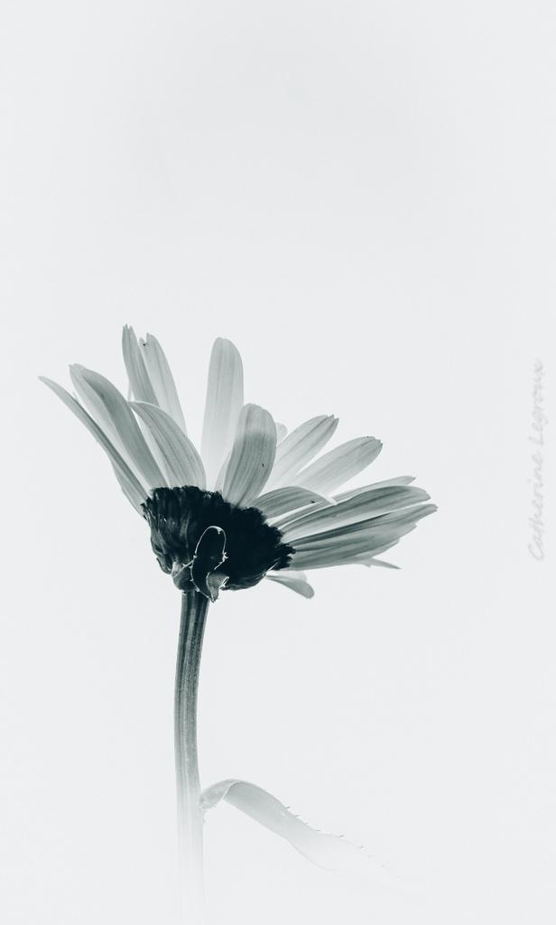 Noir et Blanc / Sépia / Désaturation partielle / Traitements divers - Page 5 50093876216_c06d3363cc_o